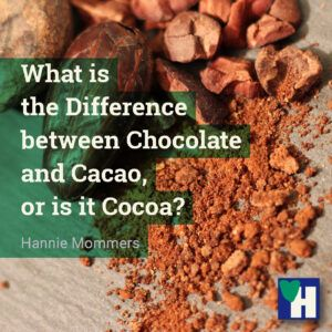 What is the Difference between Chocolate and Cacao, or is it Cocoa?