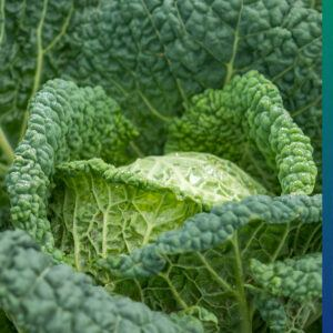Sustainability in food. Forgotten vegetables.