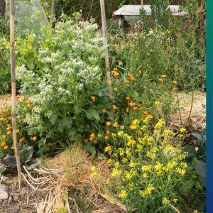 Sustainable Kitchen Garden