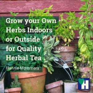 Grow your Own Herbs Indoors or Outside for Herbal Tea