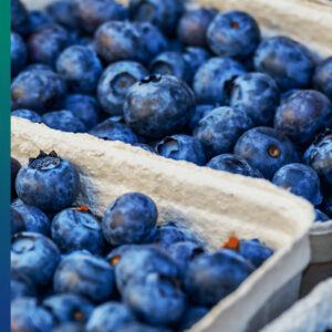 Purple and blue food: blueberries