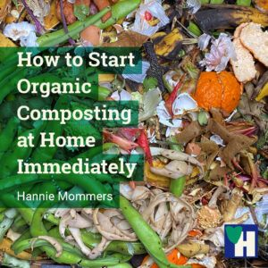How to Start Organic Composting at Home Immediately