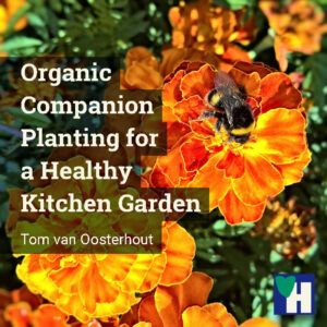 Organic Companion Planting for a Healthy Kitchen Garden