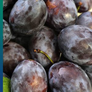 Plums are great for bowel movement