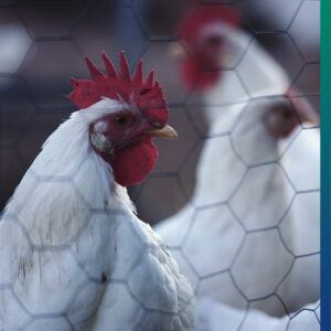 Do you trust your organic chicken?