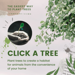 Click a Tree, the easiest way to plant trees