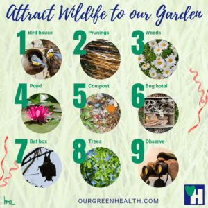 Infographic Attract Wildlife to our Garden
