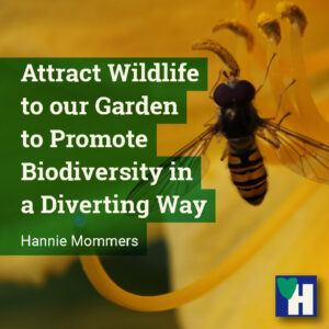 Attract Wildlife to our Garden to Promote Biodiversity in a Diverting Way