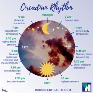 Infographic Circadian Rhythm