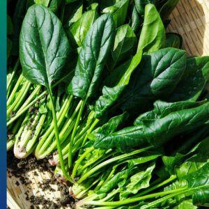Magnesium in spinach