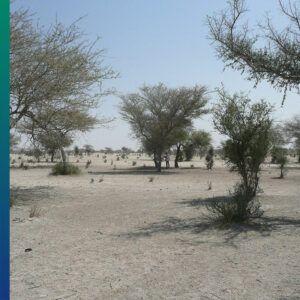 The Sahel desert