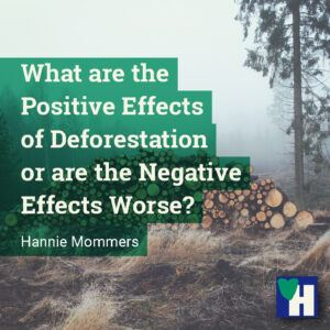 What are the Positive Effects of Deforestation or are the Negative Effects Worse?