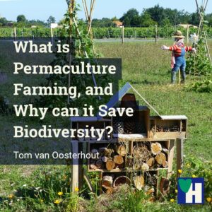 What is Permaculture Farming, and Why can it Save Biodiversity?