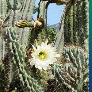 A garden full of cacti