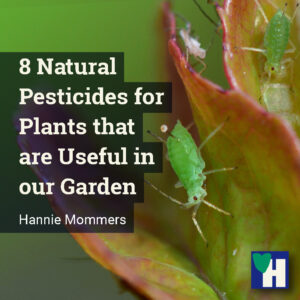 8 Natural Pesticides for Plants that are Useful in our Garden