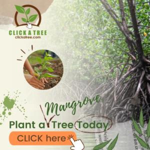 Click A Tree Mangrove