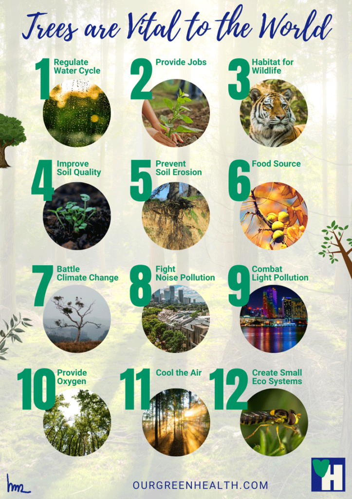 Infographic: Trees are vital to the world