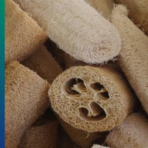 Luffa or Loofah, the natural sponge