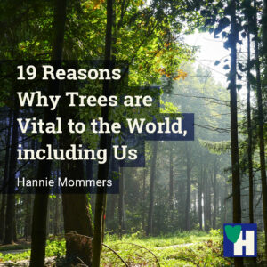 19 Reasons Why Trees are Vital to the World, including Us