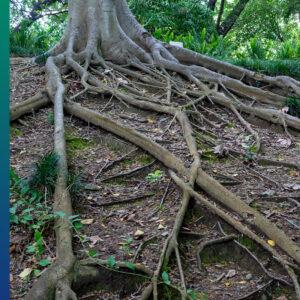 Impressive roots