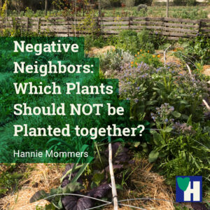 Negative Neighbors: Which Plants Should NOT be Planted together?